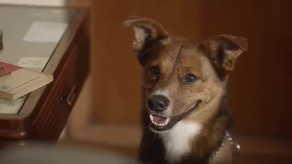 "La historia que conmueve al mundo ""The man and the Dog"""