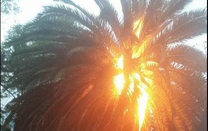 Pirotecnia. Un peligro Latente. Exclusiva de lo Sucedido Ayer en un Parque de la Delegación Benito Juárez